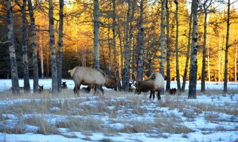 ۱۰ دلیل برای بازدید از فردریکتون کانادا